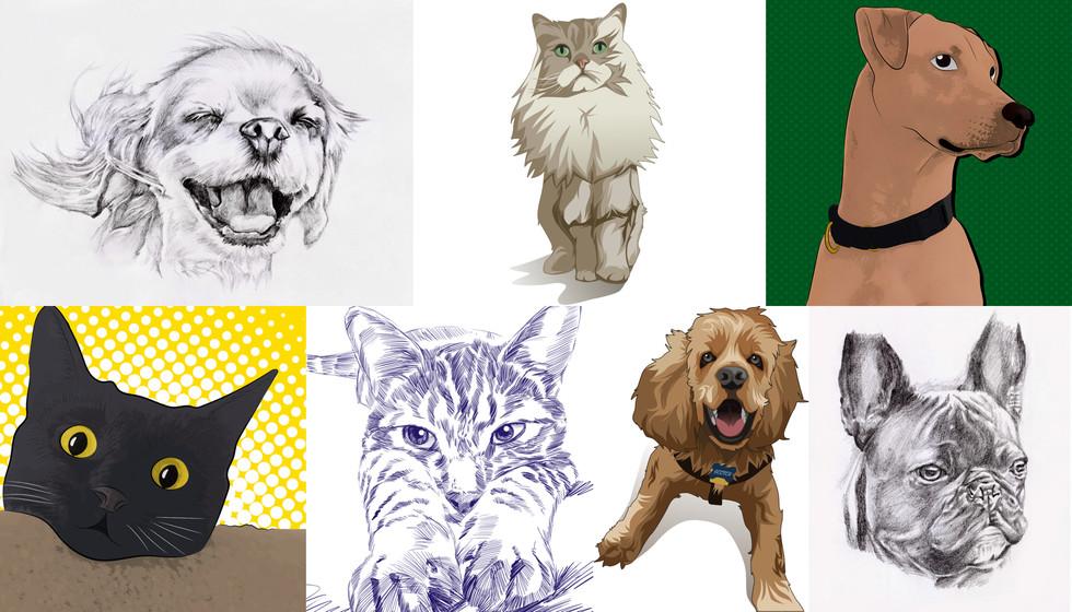 Framing Case Study: How Vet Pronto Delights Pet Owners - Custom ...