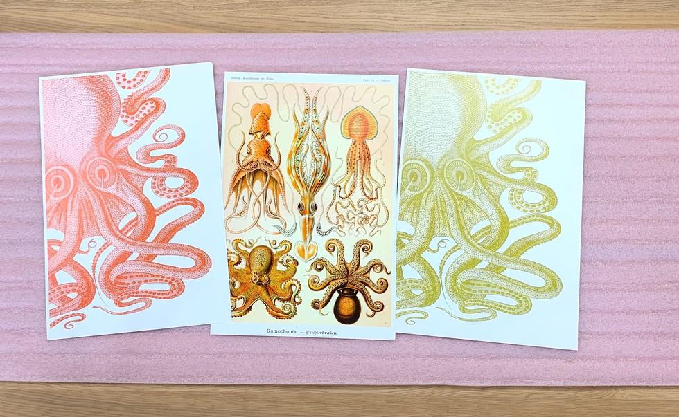 Custom Framing Online Animal Prints Giveaway