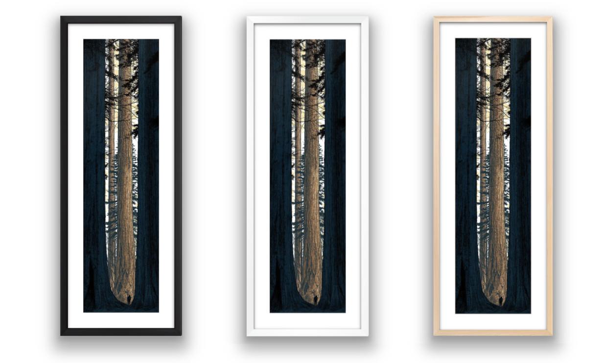 Avenue of the Giants by Dan McCarthy Custom Framed